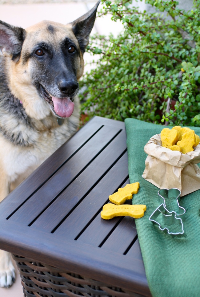 Pumpkin-peanut butter dog biscuits are a treat for your pooch!